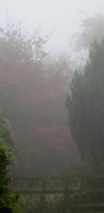Mist in the garden