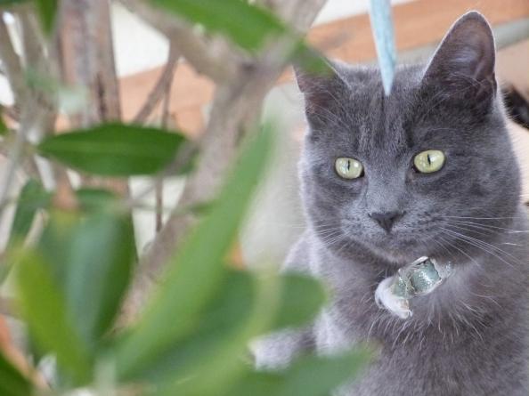 Casper considers the Olive branch