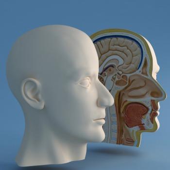 Ears, Nose, Mouth, Brain, Hair