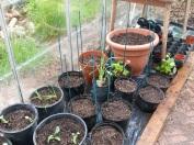 garden may 2013 2013-05-13 016